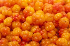 Cloudberry as a background Stock Photos