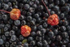 Cloudberry blackberry4 Στοκ φωτογραφίες με δικαίωμα ελεύθερης χρήσης