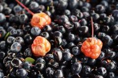 Cloudberry blackberry5 Στοκ Εικόνες