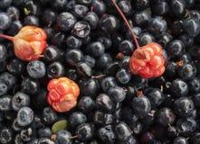 Cloudberry blackberry6 Στοκ Φωτογραφίες