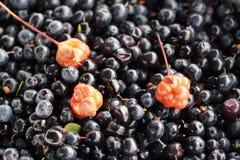 Cloudberry blackberry7 Στοκ Φωτογραφία