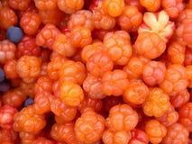 Cloudberry e mirtilos imagem de stock royalty free