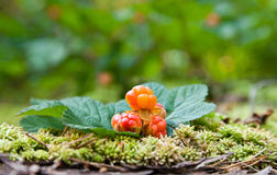 Cloudberry on a green unfocused background Stock Image