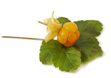 Cloudberry with leaves Royalty Free Stock Photo