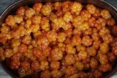 Cloudberry moroshka6 Στοκ Εικόνα