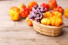 Cloudberry tart Stock Image