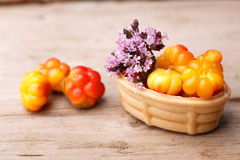 Cloudberry tart Stock Photography