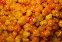 Cloudberrys maduros Foto de Stock