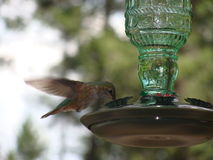Cloudcroft New Mexico hummingbird Stock Image