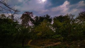 Clouded blue sky. Over the forest , trees, path royalty free stock images