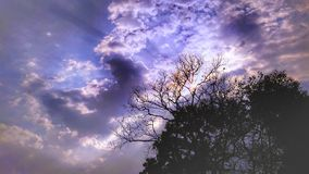 Clouded blue sky. During sunrise,yellow clouds,trees royalty free stock photography