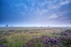 Clouded morning over marsh with heather Royalty Free Stock Images