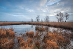 Clouded morning on swamp Stock Photos