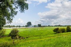 Dutch river landscape royalty free stock images