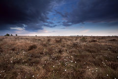 Clouded sky over marsh with cotton-grass Stock Photo