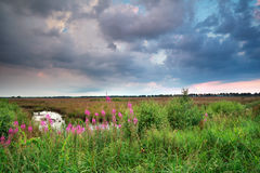 Clouded sky over wildflowers in summer Stock Photo