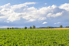 Rural landscape with clouds Royalty Free Stock Photo