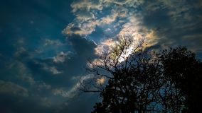 Clouded sky. And tree , sunlight , blue sky stock images