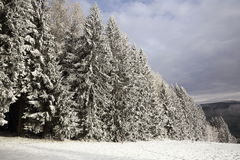 Cloudes and trees, winter landscape in Šumava in Železná Ruda, czech republic Royalty Free Stock Photo