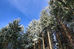 Cloudes and trees, winter landscape in Šumava in Železná Ruda, czech republic Stock Images