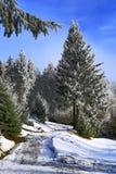 Cloudes and trees, winter landscape in Šumava in Železná Ruda, czech republic Stock Photo