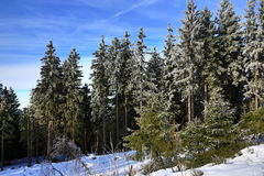 Cloudes and trees, winter landscape in Šumava in Železná Ruda, czech republic Stock Photos