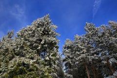 Cloudes and trees, winter landscape in Šumava in Železná Ruda, czech republic Royalty Free Stock Photos