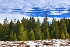 Cloudes and trees, winter landscape in Šumava in Horská Kvilda, Czech republic Royalty Free Stock Image