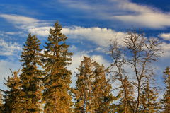 Cloudes and trees, winter landscape in Šumava in Horská Kvilda, Czech republic Stock Image