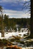 Cloudes and trees, winter landscape in Šumava in Filipova Huť, Czech republic Royalty Free Stock Photography