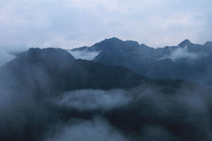 Cloudforest厄瓜多尔山关闭 免版税库存照片