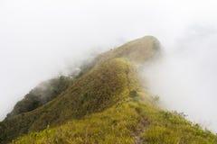 Cloudforest nel Panama Immagini Stock