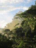 Cloudforest nell'ultima luce del giorno Fotografia Stock