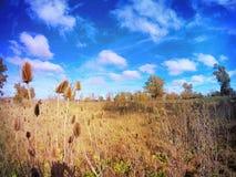 Cloudi dzień Zdjęcie Royalty Free