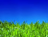 Cloudless summer Royalty Free Stock Photos