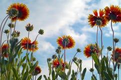 cloudletsblommor Fotografering för Bildbyråer
