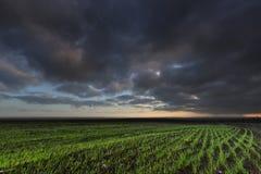 Cloudly-Morgen im Ackerland Lizenzfreies Stockfoto