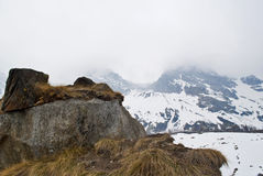 Through the clouds. East wall of monte rosa through the clouds Royalty Free Stock Images