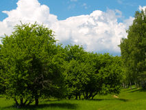 Clouds. Summers landscape with green trees and white clouds Royalty Free Stock Photos