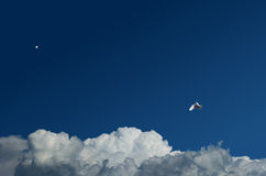 Clouds. White pigeon fly beyond clouds Stock Images