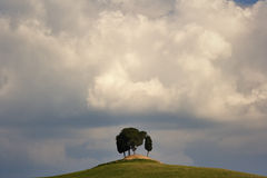 Clouds above cypress tree Stock Images