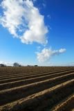 Clouds above a field. Some white clouds on deep blue sky above an asparagus fied stock photos