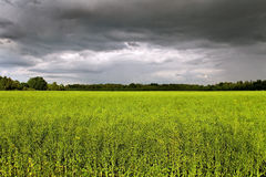 Clouds above field. Royalty Free Stock Photo