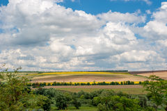 Clouds above the fields. Varicoloured fields and trees. Cloudy royalty free stock photography