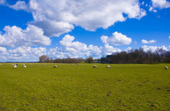 Clouds above a green field Stock Images