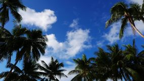 Clouds above palm trees time lapse. A video showing movement of cumulus clouds above palm trees.Presented as time lapse stock footage