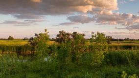 Clouds above the river with reeds. stock footage
