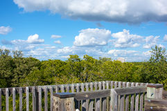 Clouds above trees. Thick white puffy clouds fill the sky above the tree line in Bonita Springs Florida, showing wooden framework of observation deck Stock Image