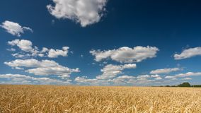 Clouds above the wheat field at sunny day - 4K time lapse stock footage