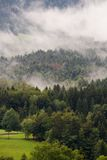 Clouds in the  Alps. Low lying cloud in a pine forest in the french alps Stock Photo